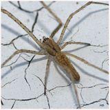 Imprimer le dessin en couleurs : Arachnides, numéro 199295