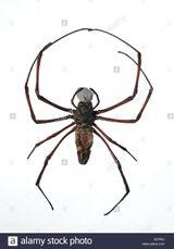 Imprimer le dessin en couleurs : Arachnides, numéro 19c1c003