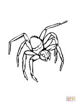 Imprimer le coloriage : Arachnides, numéro 21f88f21