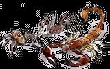 Imprimer le dessin en couleurs : Arachnides, numéro 22779