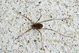 Imprimer le dessin en couleurs : Arachnides, numéro 228837