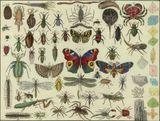 Imprimer le dessin en couleurs : Arachnides, numéro 240054