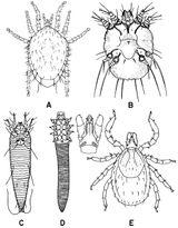 Imprimer le coloriage : Arachnides, numéro 25875