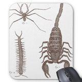 Imprimer le dessin en couleurs : Arachnides, numéro 264241