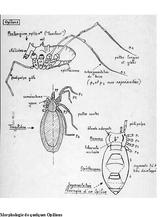 Imprimer le coloriage : Arachnides, numéro 760199