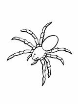 Imprimer le coloriage : Araignée, numéro 130419