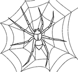 Imprimer le coloriage : Araignée, numéro 130435
