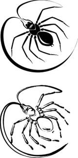 Imprimer le coloriage : Araignée, numéro 130445