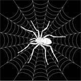 Imprimer le coloriage : Araignée, numéro 142561
