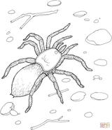Imprimer le coloriage : Araignée, numéro 1599aa56