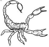 Imprimer le coloriage : Scorpion, numéro 27601