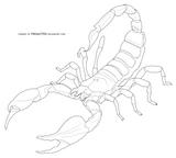 Imprimer le coloriage : Scorpion, numéro 28322