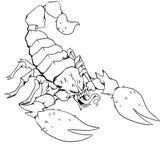 Imprimer le coloriage : Scorpion, numéro af3b1ded