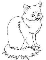 Imprimer le coloriage : Chat, numéro 4353