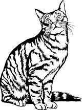 Imprimer le coloriage : Chat, numéro 4366