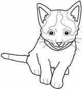 Imprimer le coloriage : Chat, numéro 5562