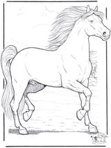Imprimer le dessin en couleurs : Cheval, numéro 117579