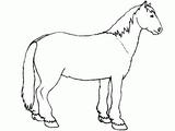 Imprimer le coloriage : Cheval, numéro 128642