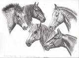 Imprimer le dessin en couleurs : Cheval, numéro 136822