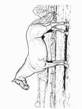 Imprimer le coloriage : Cheval, numéro 141919