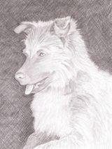 Imprimer le dessin en couleurs : Chien, numéro 587980