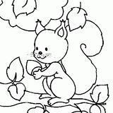 Imprimer le coloriage : Ecureuil, numéro 16248