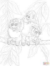 Imprimer le coloriage : Ecureuil, numéro 2497ca43