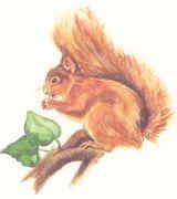Imprimer le dessin en couleurs : Ecureuil, numéro 276154