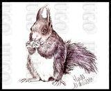 Imprimer le dessin en couleurs : Ecureuil, numéro 276165