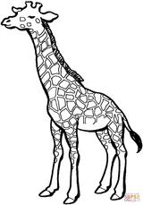 Imprimer le coloriage : Girafe, numéro 275bb6d0