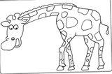 Imprimer le coloriage : Girafe, numéro 2bece515