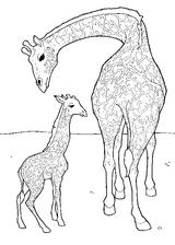 Imprimer le coloriage : Girafe, numéro 754219