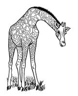 Imprimer le coloriage : Girafe, numéro 754222