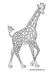 Imprimer le coloriage : Girafe, numéro 754223