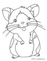 Imprimer le coloriage : Hamster, numéro 17097
