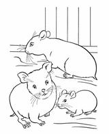 Imprimer le coloriage : Hamster, numéro 17098