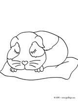 Imprimer le coloriage : Hamster, numéro 17112