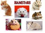 Imprimer le dessin en couleurs : Hamster, numéro 19519