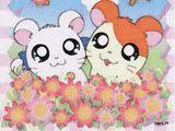 Imprimer le dessin en couleurs : Hamster, numéro 21084