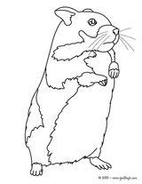 Imprimer le coloriage : Hamster, numéro 3412