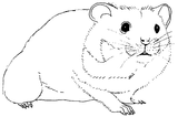 Imprimer le dessin en couleurs : Hamster, numéro 57574