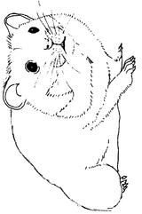 Imprimer le coloriage : Hamster, numéro 7164