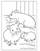 Imprimer le coloriage : Hamster, numéro 81d0b853