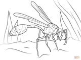 Imprimer le coloriage : Insectes, numéro 1006b2b5