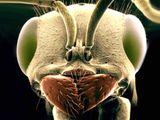 Imprimer le dessin en couleurs : Insectes, numéro 119463