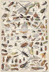 Imprimer le dessin en couleurs : Insectes, numéro 119471
