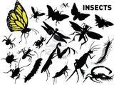 Imprimer le dessin en couleurs : Insectes, numéro 119481