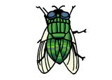 Imprimer le dessin en couleurs : Insectes, numéro 119484