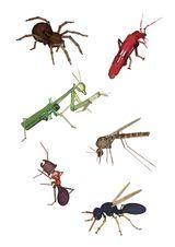 Imprimer le dessin en couleurs : Insectes, numéro 119487