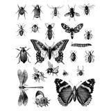 Imprimer le coloriage : Insectes, numéro 130339